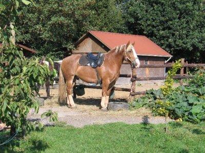 pferdespiele zum reiten